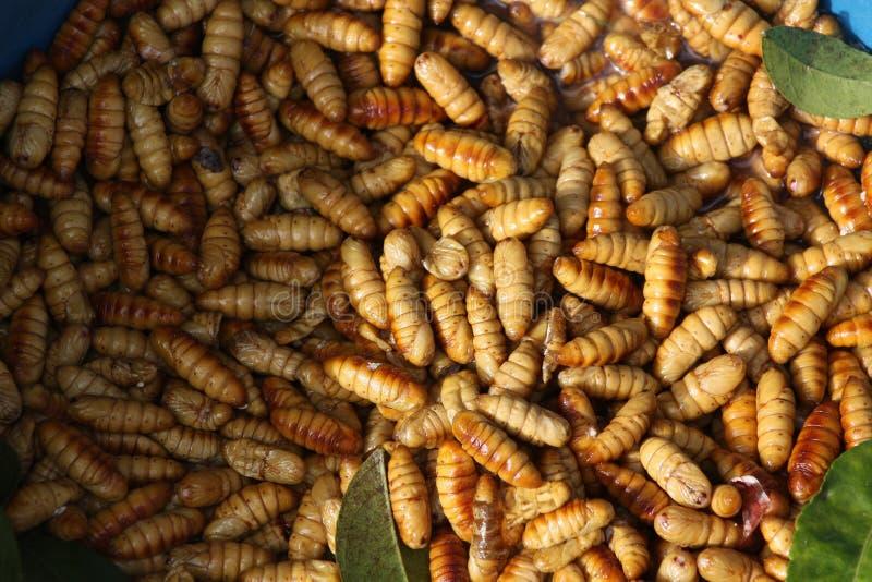 gusanos en el aire