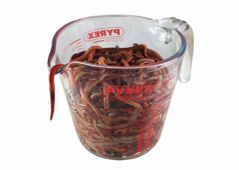 Gusanos del estiércol vegetal de Eisenia en glas imagen de archivo