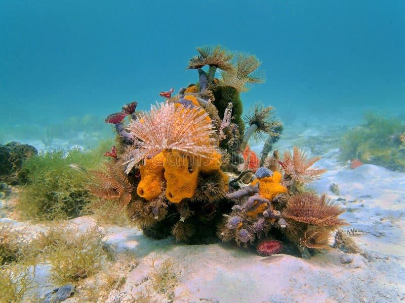 Gusanos del tubo de la vida marina y esponjas coloridos del mar foto de archivo