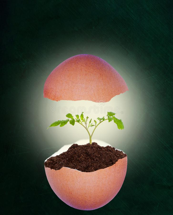 Guscio d'uovo rotto con la pianta crescente sul fondo della lavagna e sullo spazio della copia illustrazione di stock