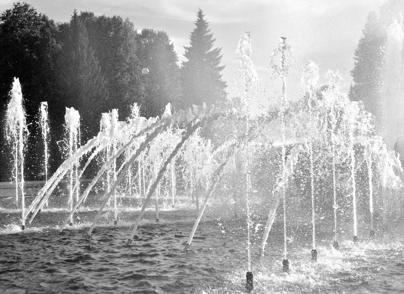 The gush of water of a fountain. Black and white stock image