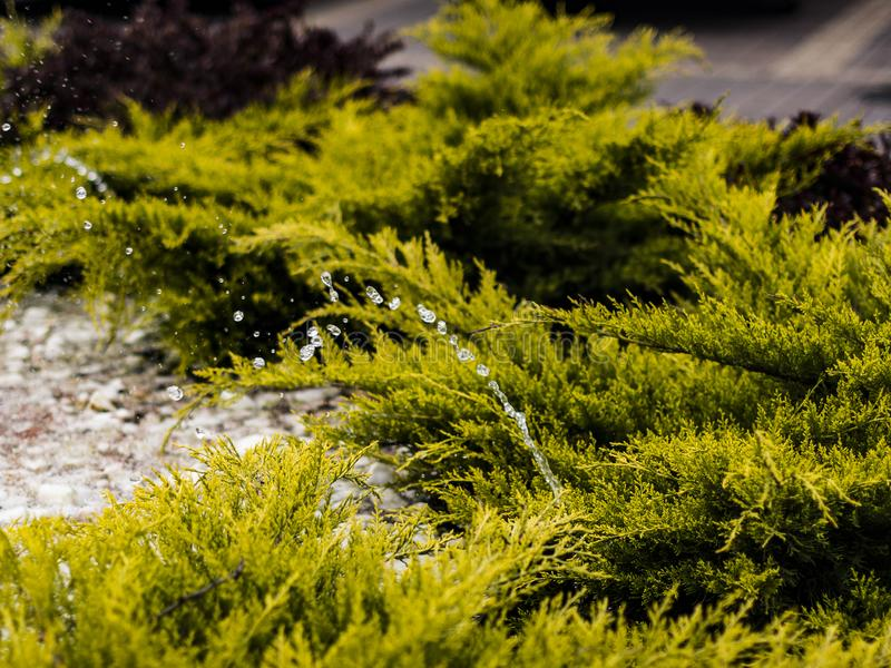 gushing stream of water from the fountain stock images
