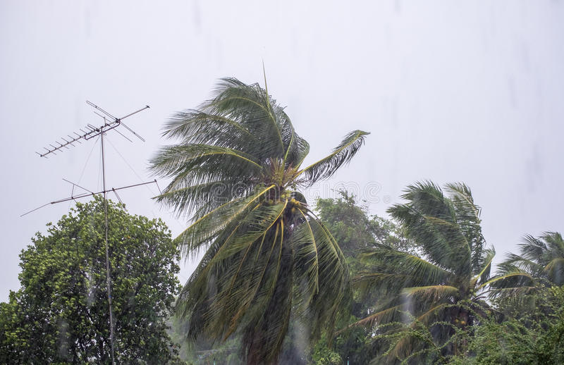 Gust wind storm raining with coconut and antenna pole royalty free stock photography