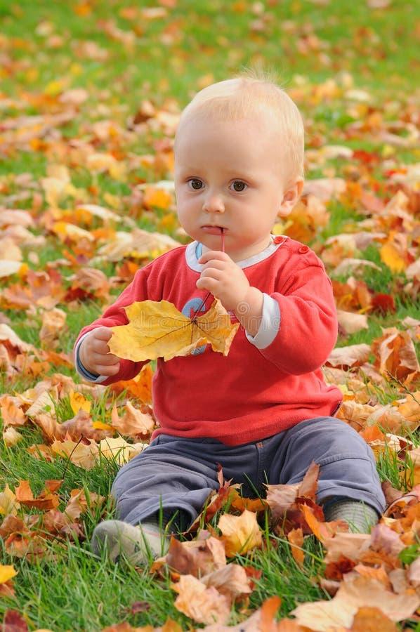 Gusto del otoño imagen de archivo libre de regalías