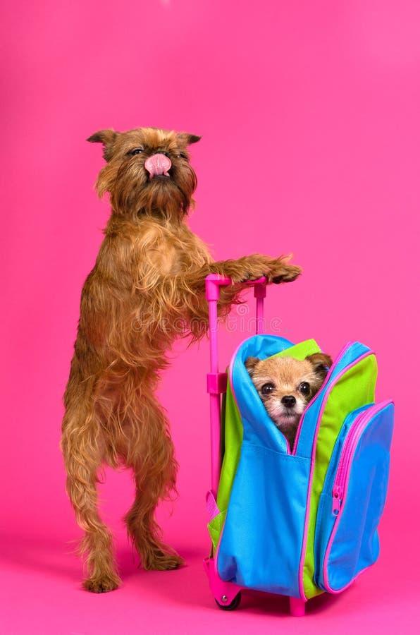 Gusto di viaggio - cani con la valigia fotografie stock libere da diritti