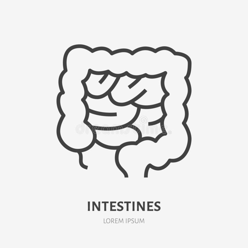 Gut flat line icon. Vector thin pictogram of human internal organ, intestines outline illustration for medical clinic vector illustration
