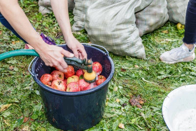 Gute Apfelernte lizenzfreies stockfoto