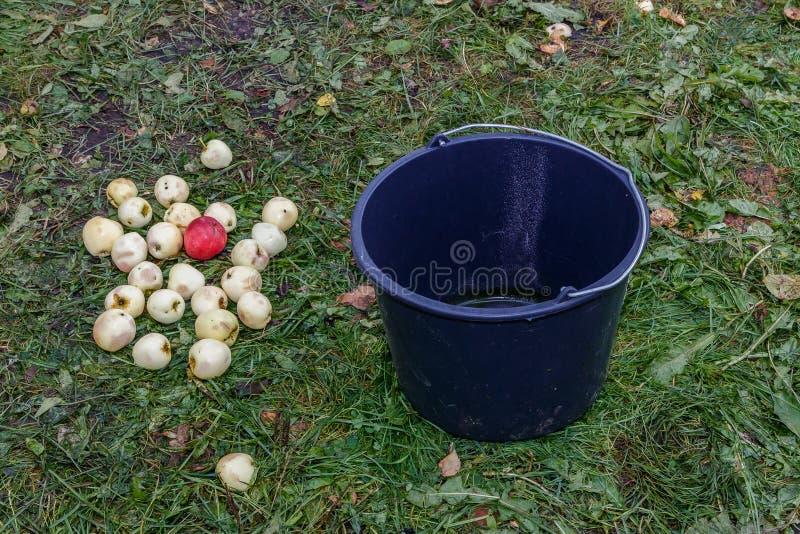 Gute Apfelernte stockbilder