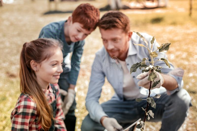 Guter ehrfürchtiger Vater, der kleinen grünen Baum zeigt stockfotos