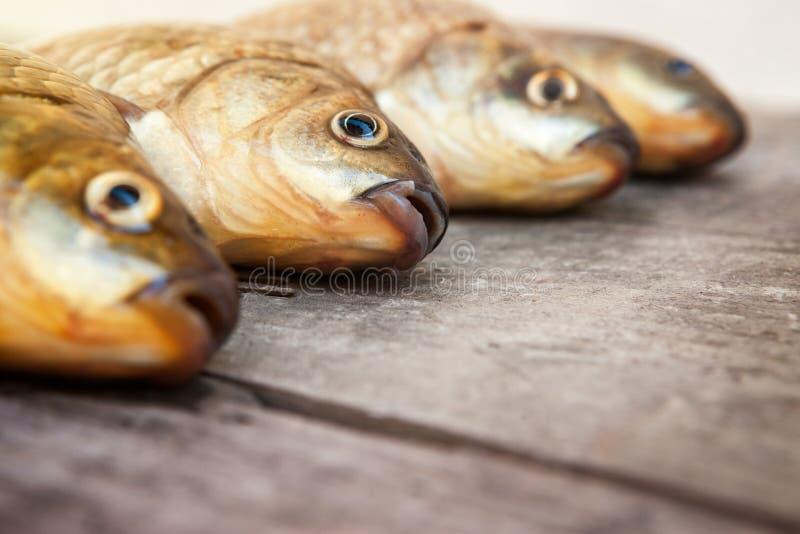 Guter fishermans Fang lizenzfreie stockfotos