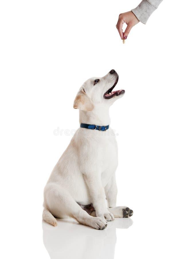 Guter Hund stockfotos