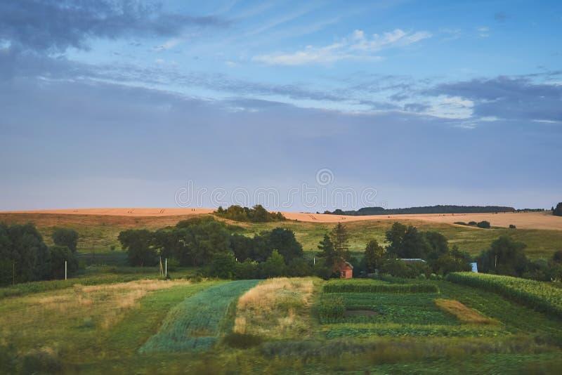 Guter Sonnenuntergang über grünem Feld stockfotos
