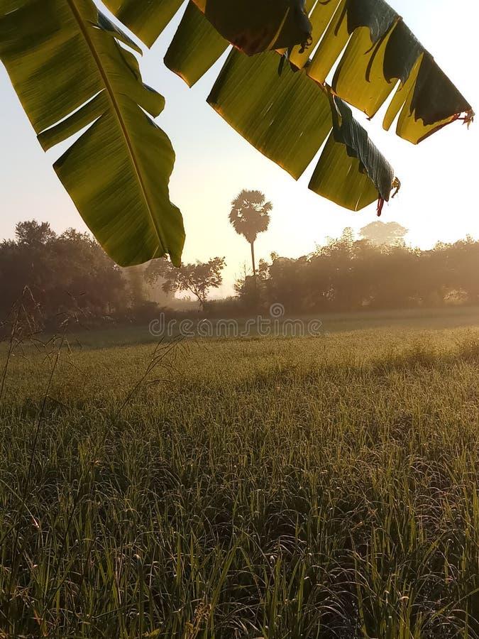 Gutes Moring mit Reisfeld stockbilder