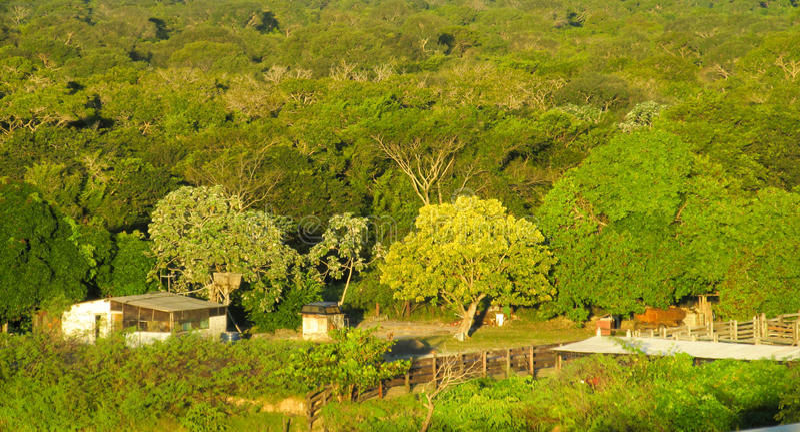 Gutshäuser unter grünen Bäumen stockfotografie