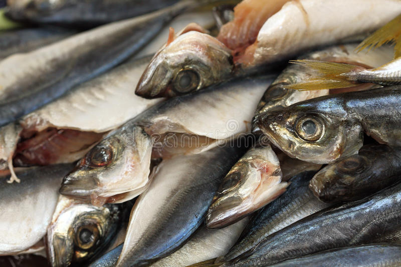 Gutted bluefish stock image