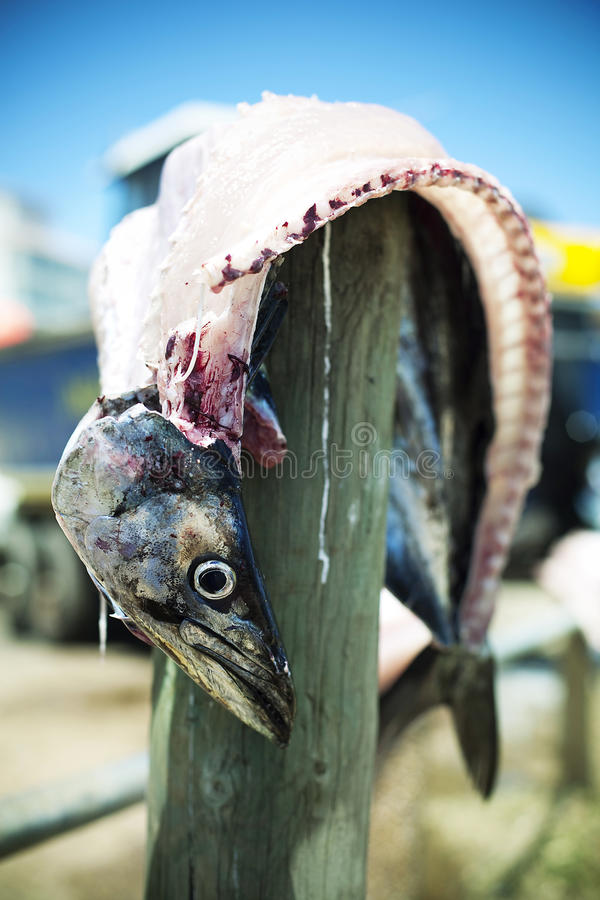Gutted fish on pole royalty free stock images
