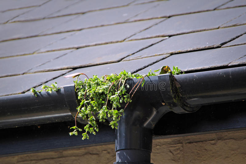 Gutter blockage. Photo of gutter blockage with weeds and plants growing near drain pipe stock photo