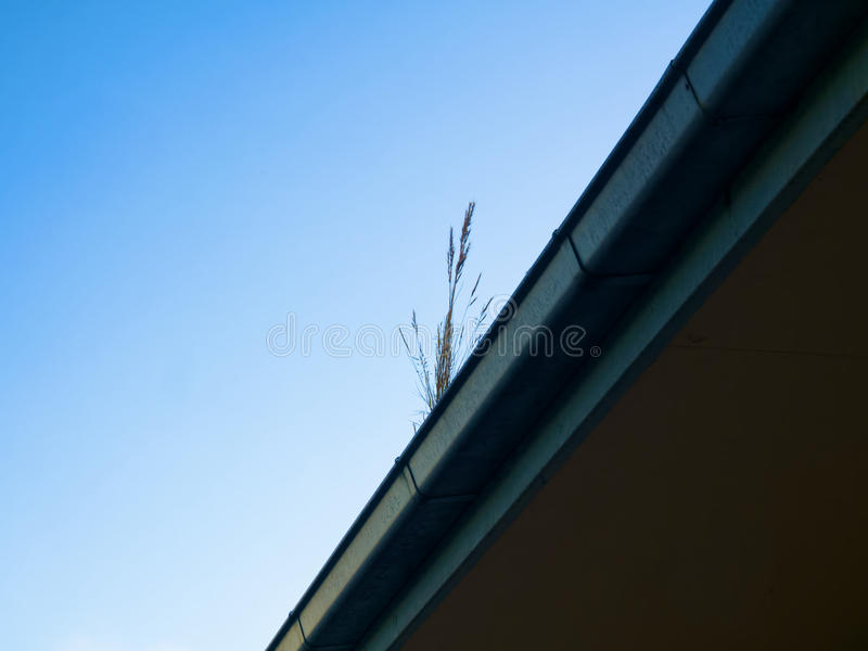 Gutter cleaning. Weeds growing out of a gutter that needs cleaning stock images