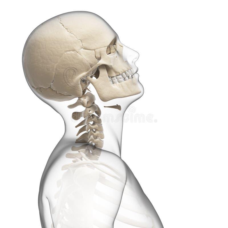 Guy bending his neck. 3d rendered illustration of a guy bending his neck vector illustration