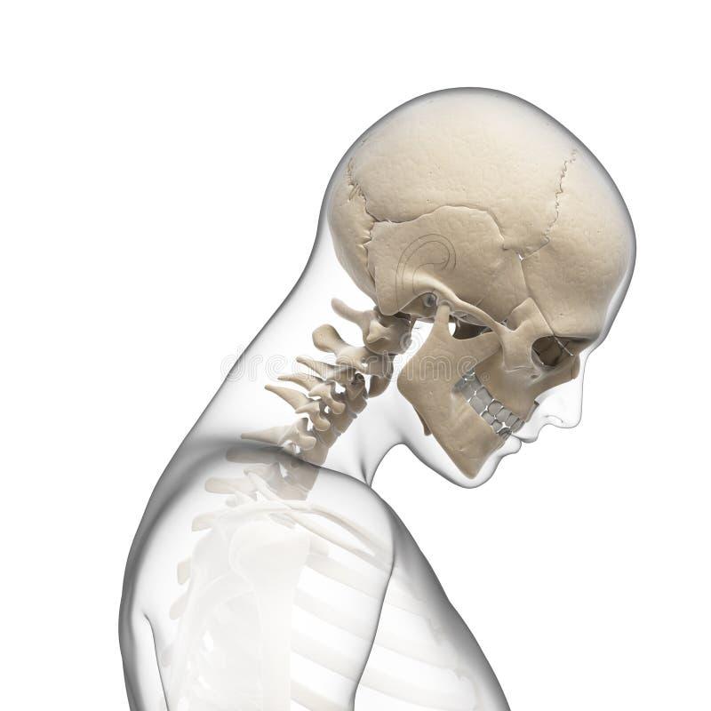 Guy bending his neck. 3d rendered illustration of a guy bending his neck stock illustration