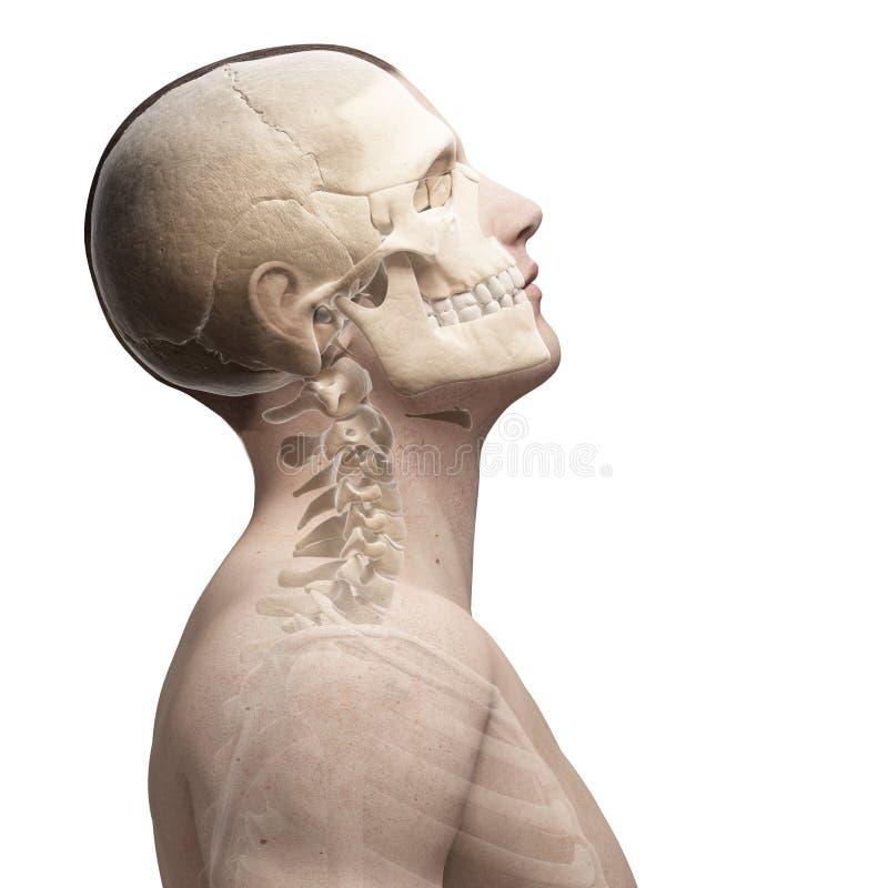 Guy bending his neck. 3d rendered illustration of a guy bending his neck royalty free illustration