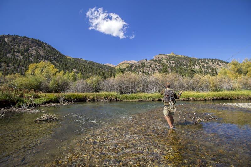 Guy Fly Fishing na forquilha do lago do rio de Gunnison fotos de stock