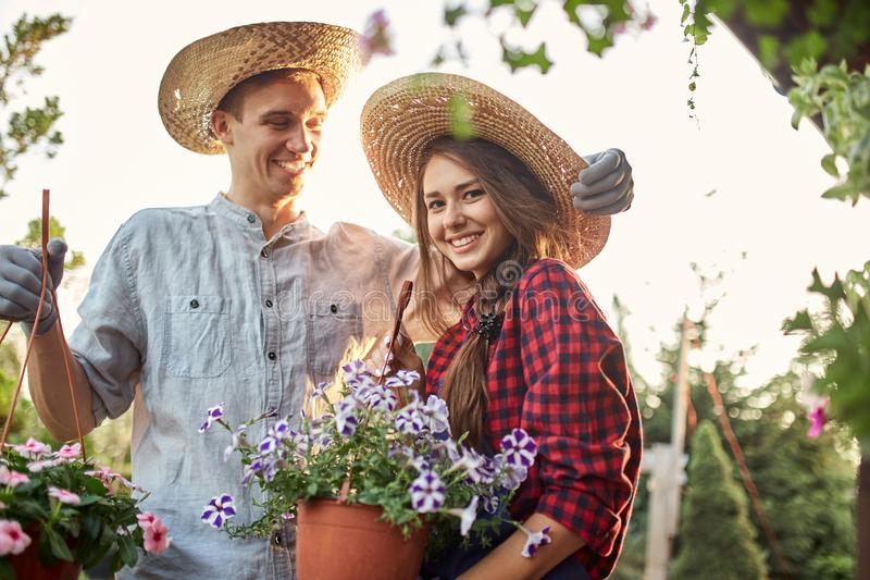 Guy and girl gardeners in a straw hats hold pots with wonderful petunia on the garden path in  on a sunny day. stock images
