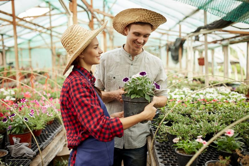 Guy and girl gardeners  in a straw hats holds and looks at the pot with flower in greenhouse on a sunny day. royalty free stock photo