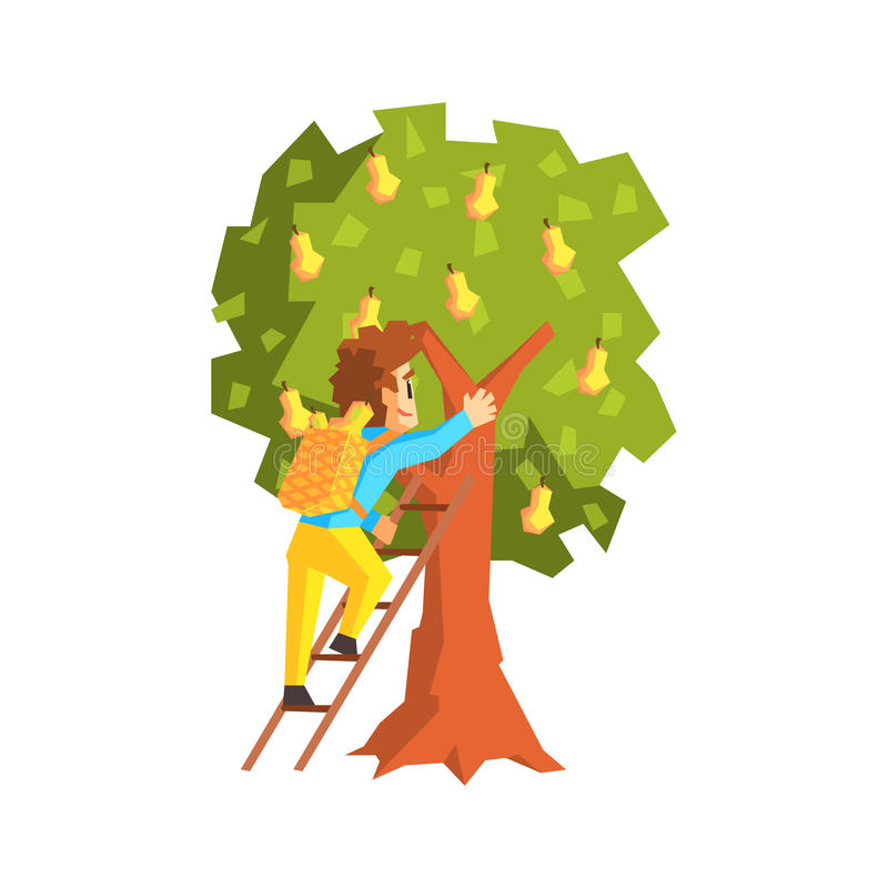 Guy Hand Picking Pears With-Ladder vector illustratie