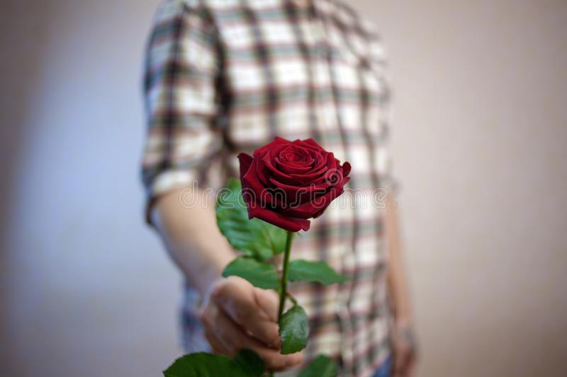 The guy in the plaid shirt holds a red rose in his hand royalty free stock image