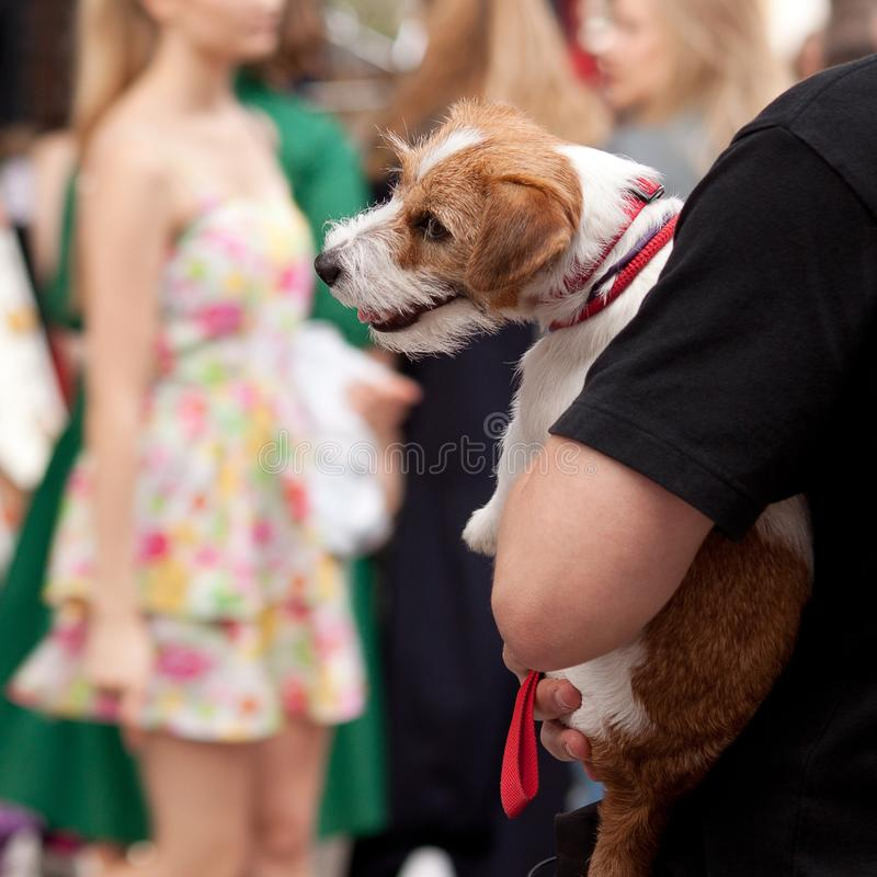 Man in a crowd holding a dog in his arms royalty free stock image