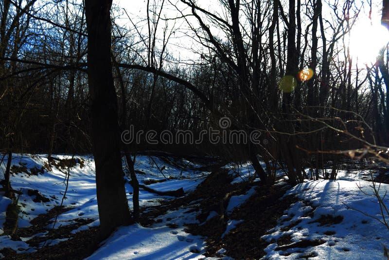 Gwóźdź jadący w fiszorek, gdy ono słuzyć jako skowa dla lasowego krzesła w lesie zdjęcia royalty free