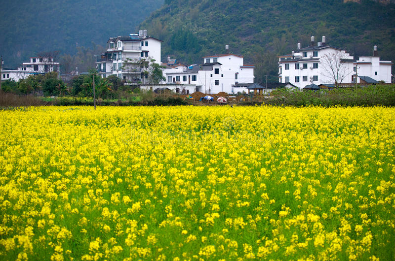 Gwałci kwiatu w Yangshuo, Guilin, Chiny zdjęcia royalty free