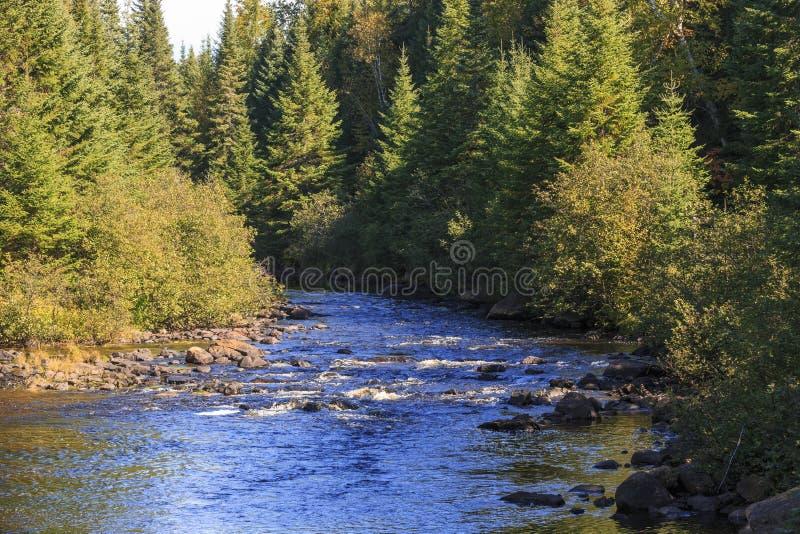 Gwałtowni na rivière Du Diable w Mont Tremblant Nationalpark obrazy royalty free