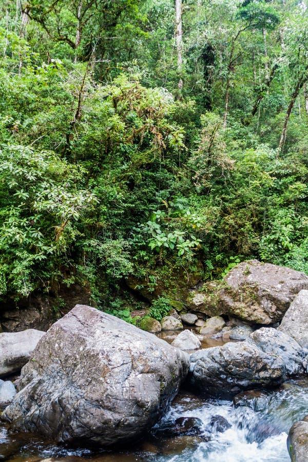 Gwałtowni Rio Hornito rzeka i dżungla w Pan zdjęcie stock