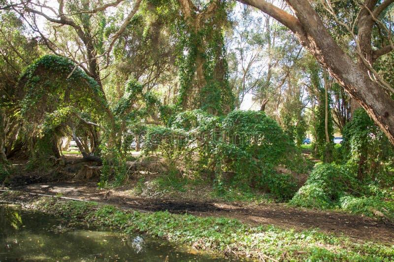 Gwelup, Austrália Ocidental: Jardim secreto imagem de stock