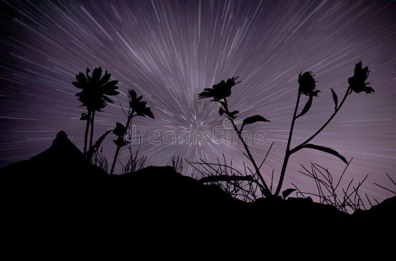 Gwiaździste smugi i kwiat sylwetki fotografia stock