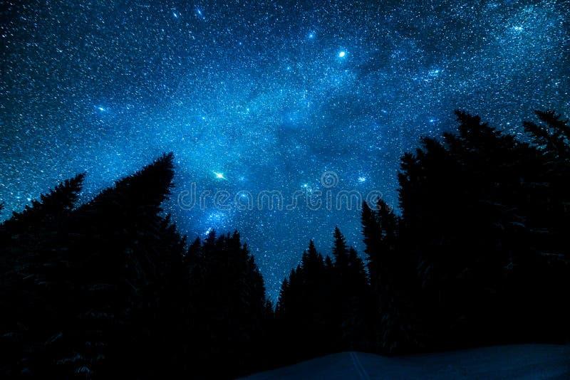 Gwiaździsty niebo w noc lesie obraz stock