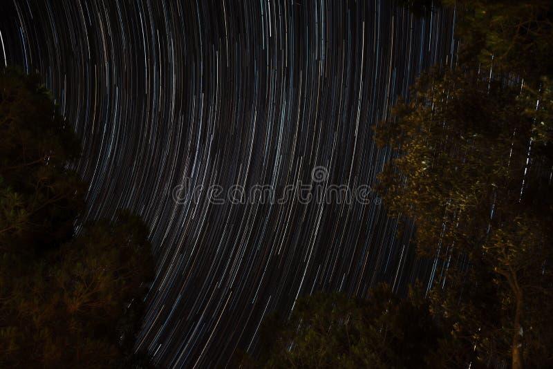 Gwiazda ślada przy nocą nad drzewami zdjęcie royalty free