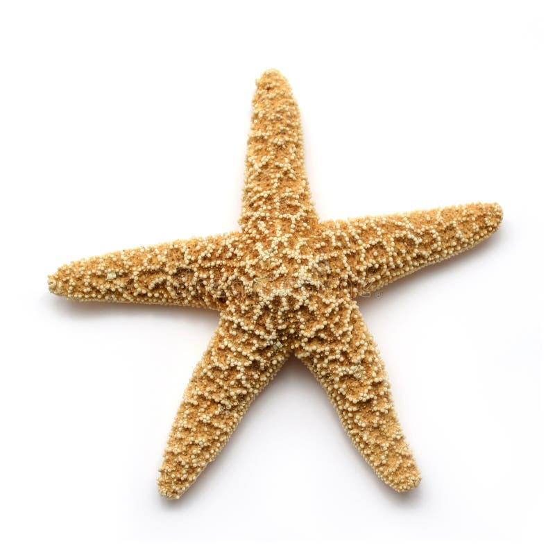gwiazda morska zdjęcie stock