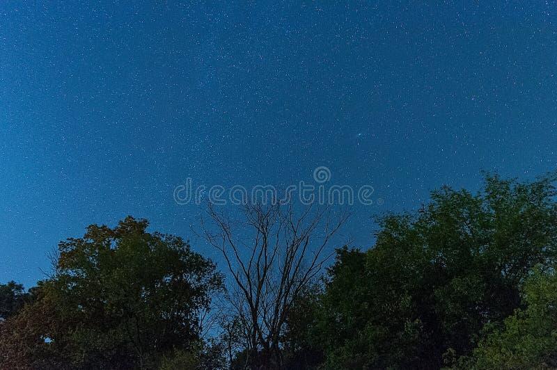 Gwiazdy Nad drzewa błyszczy jaskrawy w nocnym niebie obrazy royalty free