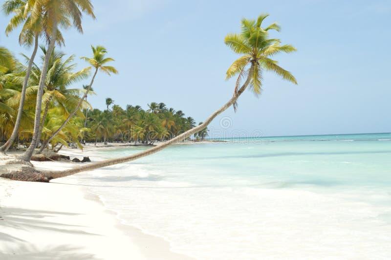 Gyckel för sol för blått vatten för sand för härliga stränder för öpalmträd vit royaltyfri foto