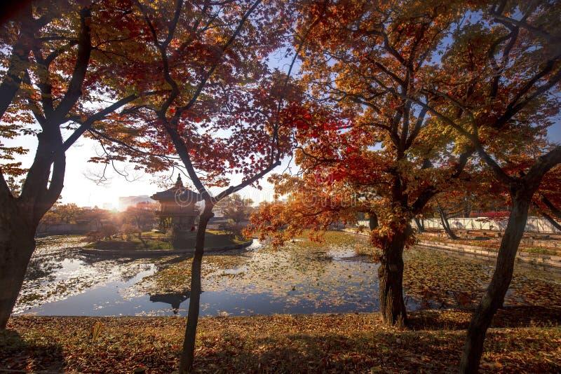 Gyeongbokgung pałac w jesieni obrazy royalty free