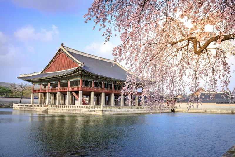 Gyeongbokgung palace with cherry blossom tree in spring time in Seoul city, South Korea. Gyeongbokgung palace with cherry blossom tree in spring time in Seoul stock image
