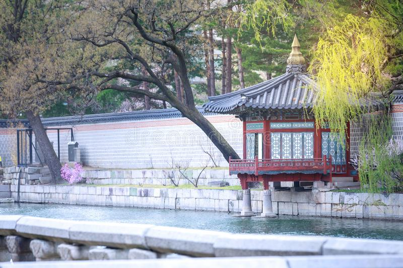 Gyeongbokgung palace with cherry blossom tree in spring time in Seoul city, South Korea. Gyeongbokgung palace with cherry blossom tree in spring time in Seoul royalty free stock photography
