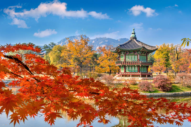 Gyeongbokgung Palace and Soft focus of Maple tree in autumn,Kore. Gyeongbokgung Palace and Soft focus of Maple tree in autumn, seoul Korea royalty free stock photo
