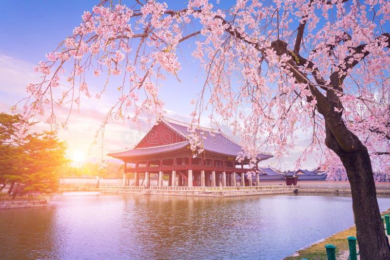 Gyeongbokgungpaleis met binnen de boom van de kersenbloesem in de lentetijd royalty-vrije stock foto's