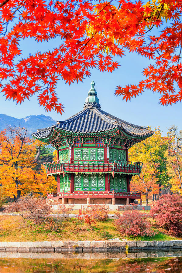 Gyeongbukgung und Ahornbaum im Herbst in Korea stockfotografie