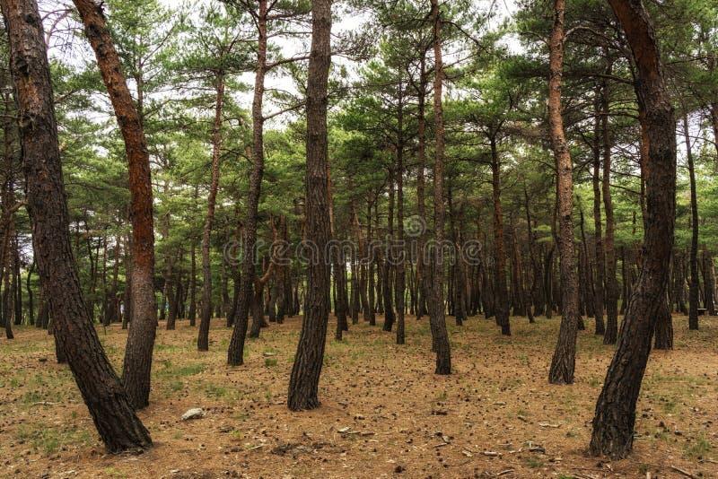 Download Gyeongpo jeziora park obraz stock. Obraz złożonej z koreańczyk - 53776049