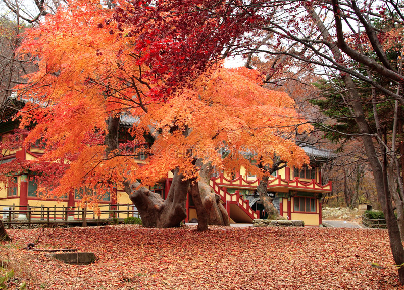 Gyeryongsan National Park Korea stock photo